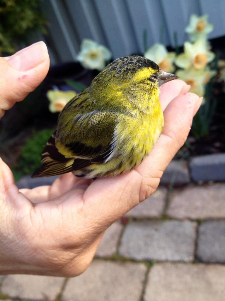 je to krásný ptáček a fajn pocit ho zachránit