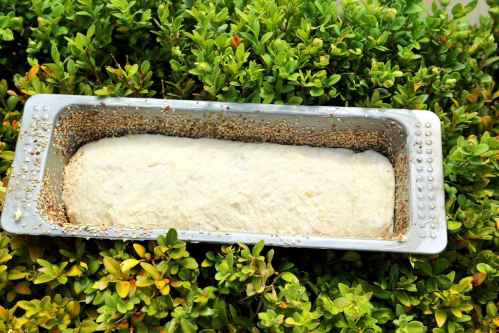 """po srolování těsta přeneste do máslem vymazané formy, kterou můžete vysypat semínky. Na dalším snímku uvidíte, jak nádherně z téhle """"placky"""" nakynul..."""