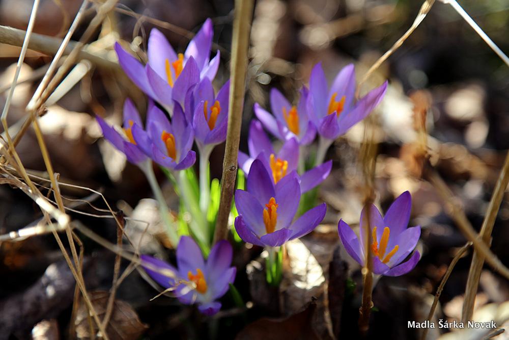 konečně dorazilo jaro i k nám na zahradu...